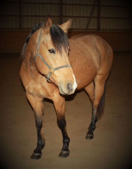 Tuff Melody Bar, American Quarter Horse Mare for sale in Indiana