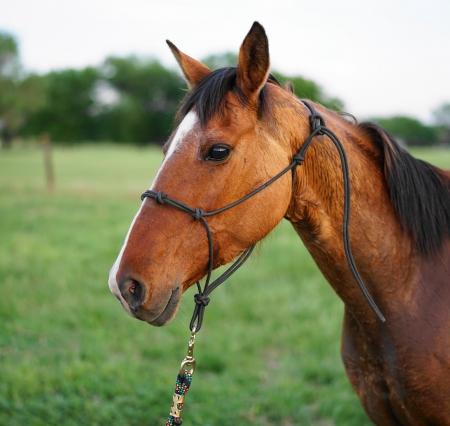 Roserock, American Quarter Horse Mare for sale in Oklahoma