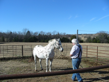 C A Spotted Wonder, Appaloosa Stallion for sale in Oklahoma
