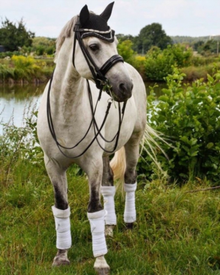 Eydis, Ponies Gelding for sale in New Mexico
