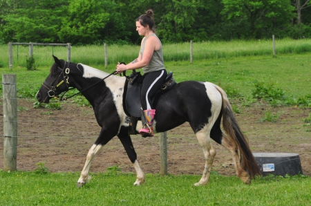 Lady Silver Constellation, Tennessee Walking Horses Mare for sale in Ohio