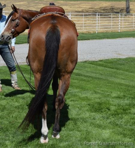 Giselle, American Quarter Horse Gelding for sale in Georgia