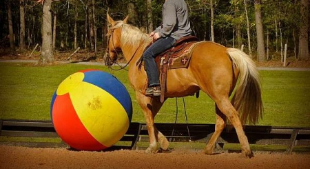 jackiny, Palomino Mare for sale in California