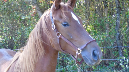 Aurora, Thoroughbred Mare for sale in Ohio