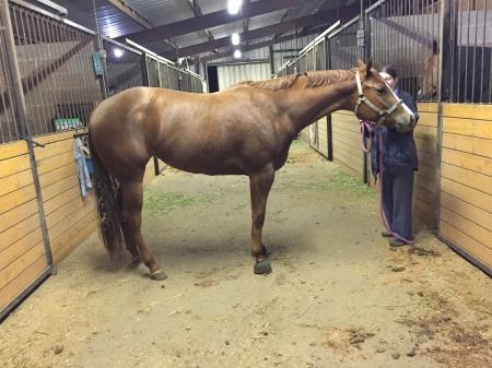 BPF Secret Cheeks, American Quarter Horse Mare for sale in Oregon