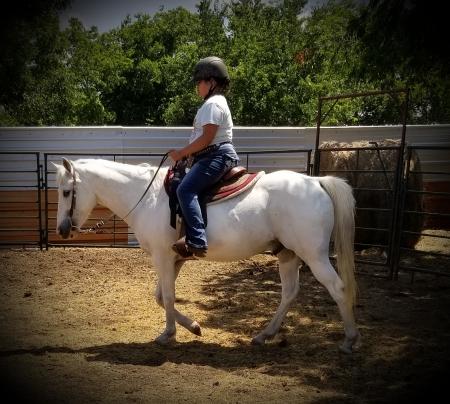 Scout, Appendix Quarter Horse Gelding for sale in Texas