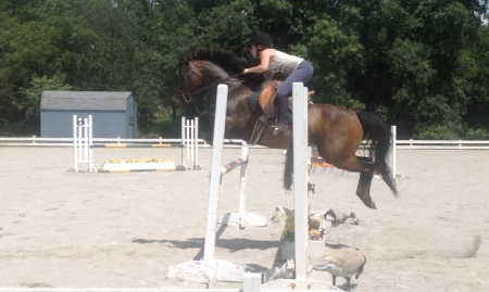 Price Lowered- Greystoke's Lexus Hunter/ Jumper, Thoroughbred Cross Mare for sale in New York