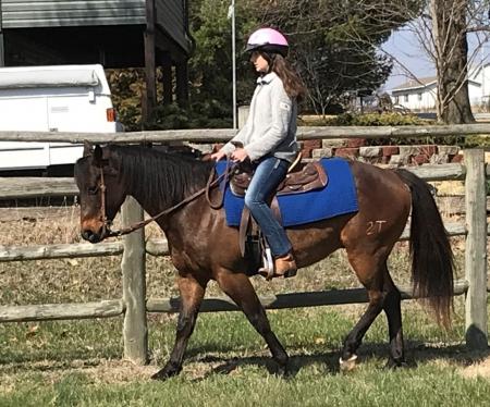 I Am Fancyfree, American Quarter Horse Gelding for sale in Missouri