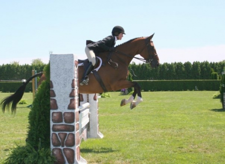 Pamina, Holsteiner Mare for sale in Vermont