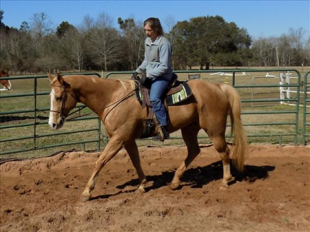 Pecos, Palomino Gelding for sale in California