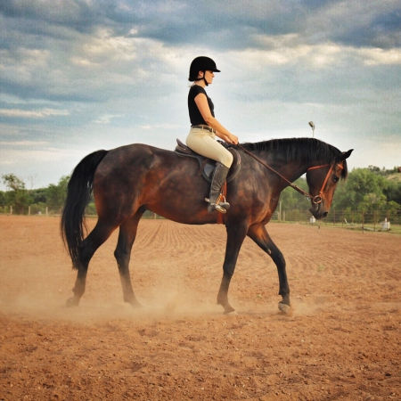 Baron, Thoroughbred Gelding for sale in Colorado