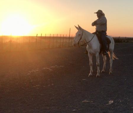 Casper, Mule Gelding for sale in Texas