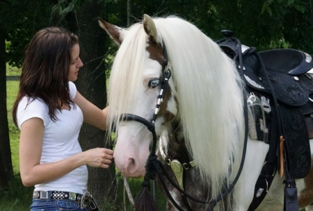 Healthy American Trained Gypsy Vanner Gelding Horse Ready, Gypsy Vanner Gelding for sale in Texas