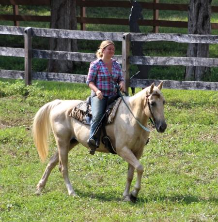 Skipper, American Quarter Horse Gelding for sale in Missouri