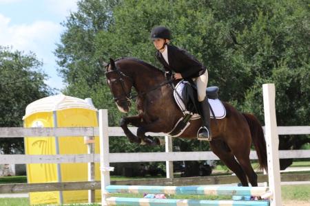 Elvis's Onyx, Welsh Pony Gelding for sale in Texas