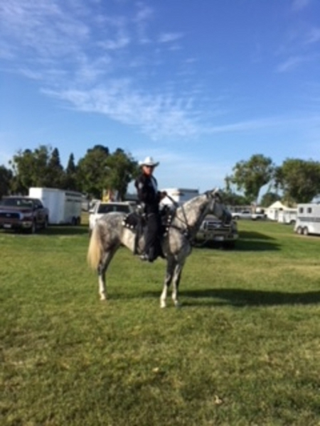 Nor, Andalusian Gelding for sale in California