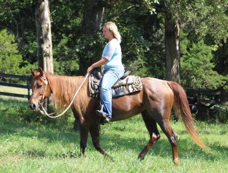 Lakota, American Quarter Horse Mare for sale in Missouri