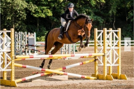 KC Whisper, Oldenburg Gelding for sale in New Jersey