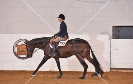 DOMINATING COUNT, Appendix Quarter Horse Gelding for sale in Ohio