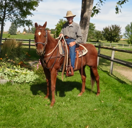 Noah, American Quarter Horse Gelding for sale in Montana