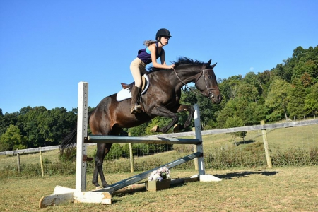 My Smartie Girl, Thoroughbred Mare for sale in Virginia