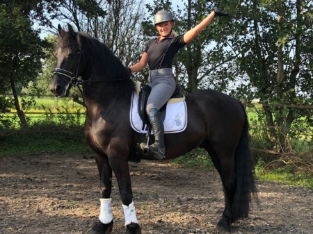 trained frisain  horse, Friesian Gelding for sale in Texas