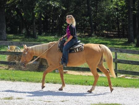 Duchess, American Quarter Horse Mare for sale in Missouri