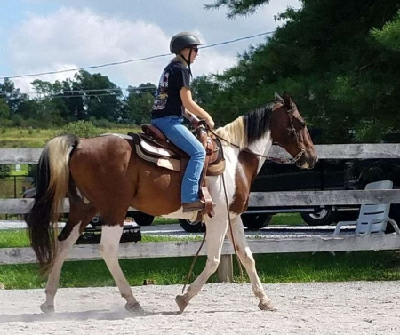 Amazingly All Around, Athletic Paint Gelding, Other Gelding for sale in California