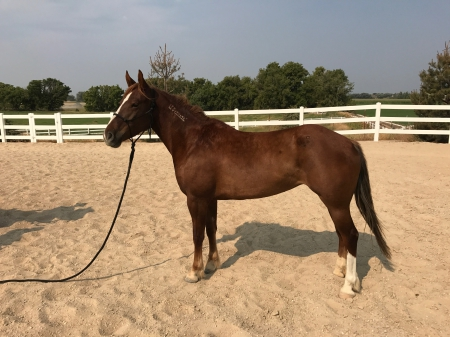 MayDay , Mustang Mare for sale in Idaho