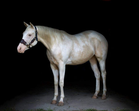 Lacy, American Paint Horse Association Mare for sale in Illinois