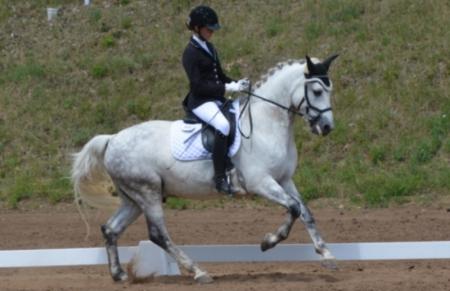Eydis, Ponies Gelding for sale in California