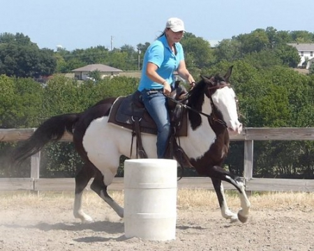 Proud Ryda, PAINTALOOSA Gelding for sale in New York