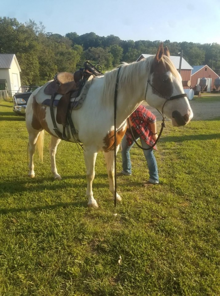 Taz, Other Gelding for sale in Iowa