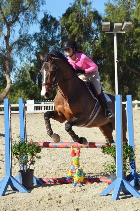 Swingtyme, Dutch Warmblood Gelding for sale in New York