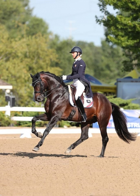 Nyte D, Dutch Warmblood Gelding for sale in New York