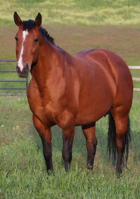 PRECIOUS LIL PEARL, American Quarter Horse Mare for sale in Montana