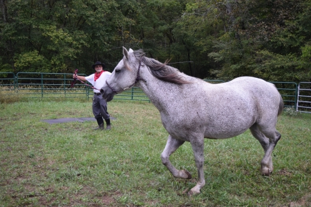 Bailey, American Quarter Horse Gelding for sale in Missouri