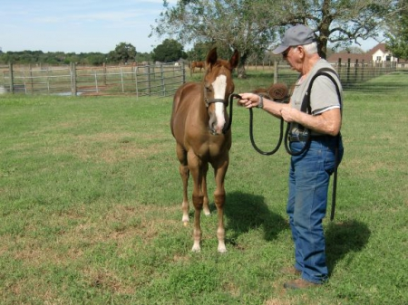 UNNAMED, American Paint Horse Association Colt for sale in Texas