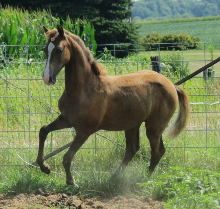 OTM There is a Season, Morgan Mare for sale in Illinois