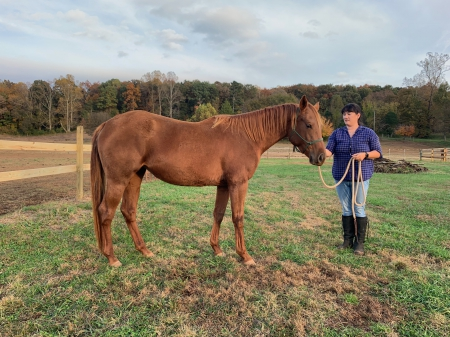 Indy-Price Reduced, American Quarter Horse Mare for sale in Tennessee