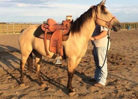 Dun quarter mare horse 469 xx 415 xx 7106, Quarter Horse Cross Mare for sale in California