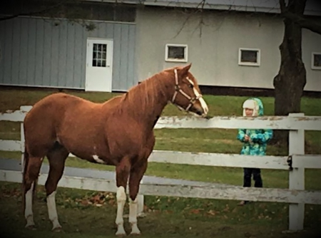 Awesome Savannah, American Paint Horse Association Mare for sale in Wisconsin