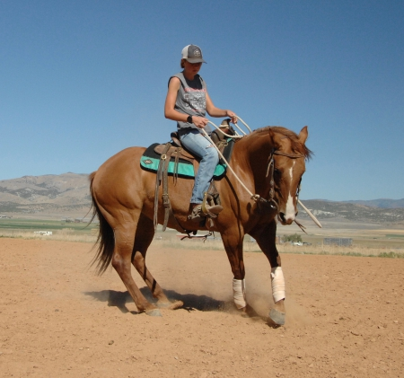 Little Sassafras, Quarter Horse Cross Mare for sale in Utah