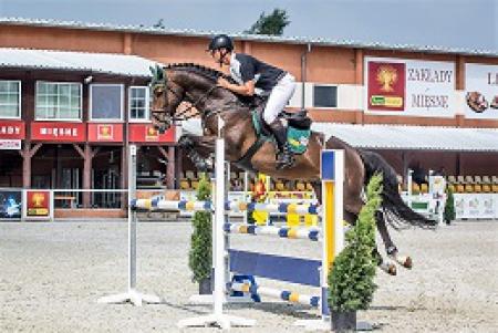 Amaru L, Holsteiner Stallion for sale in Alberta