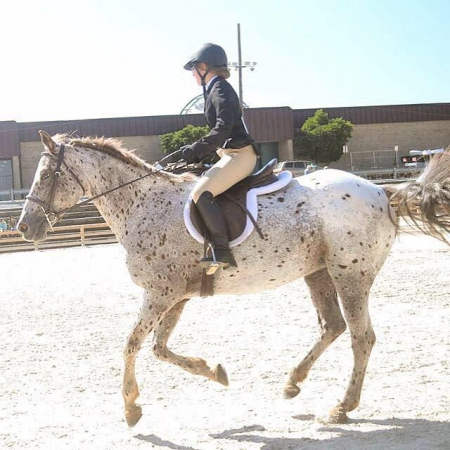 Kodak Moment, Appaloosa Mare for sale in Maryland
