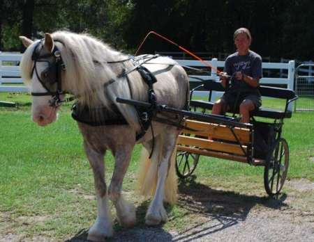Farley is every girls' dream! She is a beautiful mare, Gypsy Vanner Mare for sale in Washington