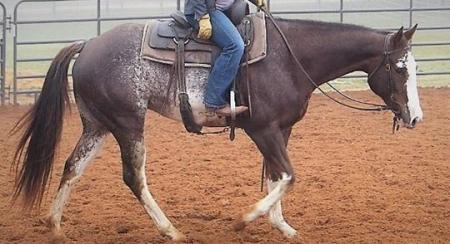Pennsylvania Horses For Sale - MyHorseForSale com Equine