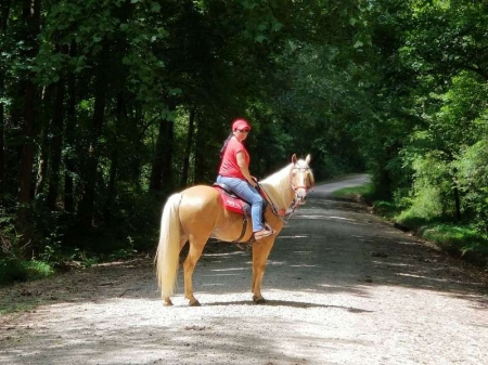 Flame , Tennessee Walking Horses Gelding for sale in Florida
