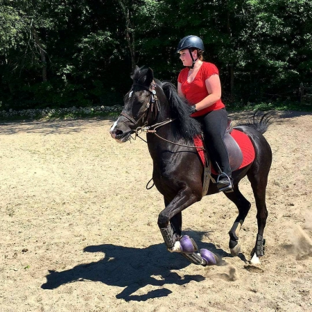 Lucky ,  Gelding for sale in Florida