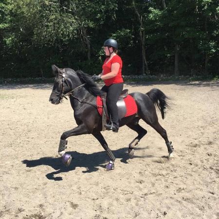 jack black, Tennessee Walking Horses Gelding for sale in Missouri